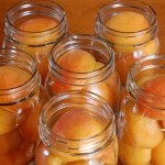 Apricots in Light Syrup